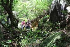 По одной из многочисленных тропинок заповедника Сейшельский Морн поднимаемся на гору Три Брата