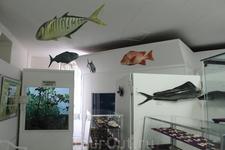 Здесь представлены образцы флоры и фауны Сейшел, как ныне существующие, так и исчезнувшие