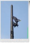 На стометровой отметке обелиска закреплена как бы летящая крылатая бронзовая фигура богини Победы Ники. В правой руке она держит сияющий венок Славы. У ...