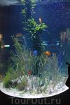 Очень симпотишный аквариум.
