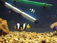 яркая рыбёха
