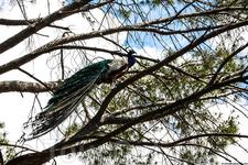 Я и не знал, что он может залезть на дерево!