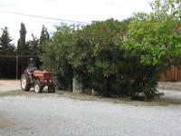 Вот мы и приехали на виноградники. Этот небольшой трактор стоял во дворе.