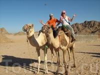 а здесь и верблюды вместе с нами позируют