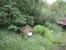 дендрологический парк