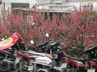 Цветы и мопеды-символы Вьетнама