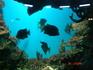 в Севастополе мы посетили океанариум.
