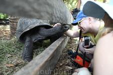В гостях у Тортиллы. Сейшельские черепахи большие и добрые. Мы с ними подружились.