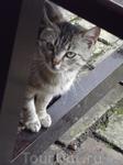 Сербский кот Фёдор. Назван в честь Достоевского.