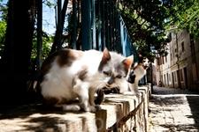 Бандитские морды местных котов