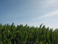 просто красиво ) именно зимой вся зелень на острове красива и сочна