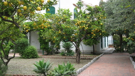 Лимоны в каждом дворе.