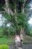 Бали/ дерево баньяна огромных размеров