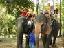 Прогулка на слониках в Номуанг 2