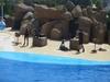 Фотография Аквапарк и дельфинарий Marineland