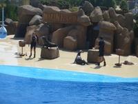 Аквапарк и дельфинарий Marineland