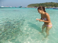 остров Racha (Raya). Огромное количество рыб и все они хотят жрать!