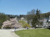 площадь перед колонадой. цветущее тюльпановое дерево