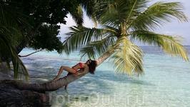 как не прилечь на такой гостеприимной пальме:-)