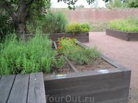 В саду пряных трав Редутти Котка