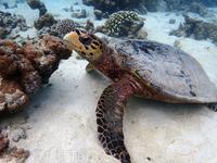 Далее будут виды со снорклинга в Баросе (baros maldives)