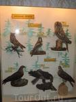 Хищные птицы Белозерья.