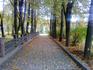 Аллея рядом с Чеховской дачей.