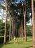 Парк рядом с отелем. Многовековые деревья.