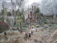 В оранжерее проживают экзотические и даже очень редкие растения.