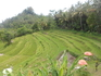 Красивые рисовые терассы по дороге