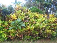 Как можно не восхищаться природой Бали, когда в качестве сорняков там растут такие красавцы, а мы с большим трудом выращиваем их дома в горшках на подоконнике ...