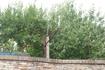 Деревьев  с крупными гранатами по трассе было много!