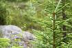 Гора поражает своим контрастом, внизу очень густой лес и красивые ёлочки, на вершине выжженный лес с уродливыми деревьями.