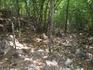 В лесу возле Скельской пещеры