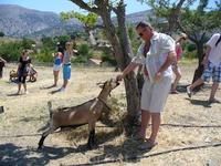 Зоопарк на Лассити.Коза дикая Кри-кри.