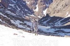В Марокко зимой бывает снег. И даже горнолыжные курорты присутствуют.
