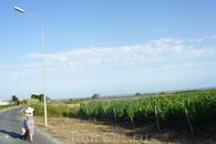 А еще там огромные виноградники и вкусное вино