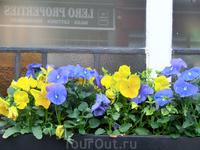 """Ну и напоследок немного лондонских цветов. Они очень разные - вот такие простые """"Анютины глазки""""."""