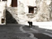 Еще одна кошка, гуляющая по монастырю Превели :)