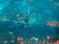 гости в аквариуме