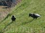 птички в Нарвской Крепости