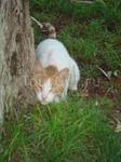 там очень милые коти)))