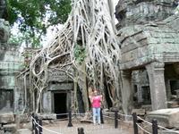 Храм Та Пром Храм Та-Прум (Ta Prohm) был построен королем Джайяварманом VII в память о своей матери. До 2009 года он был интересен тем, что его не стали очищать от джунглей. Храм и сейчас в некоторых
