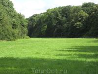 Вот такая вот поляна в лесу, можно постелить пледик и отдохнуть)))
