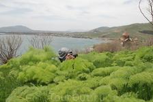 Вот такая пушистая трава растет у Севана. В ней легко можно затаиться и спрятаться от всех