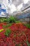 Ботанический сад Монте