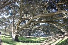 Такой вот сказочный лес.