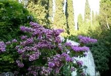 Никитский ботанический сад -красота!