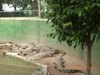 Крокодилий питомник в Хамат Гадере... Видов там ну очень много...