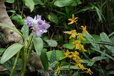 Орхидеи Лоро парка.
